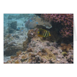 Beautiful Tropical Butterfly Fish Stationery Note Card