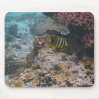 Beautiful Tropical Butterfly Fish Mouse Pad
