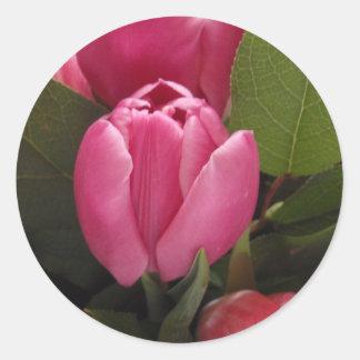Beautiful Tulip Classic Round Sticker