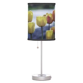 BEAUTIFUL TULIPS  LAMP