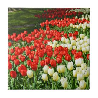 Beautiful tulips tile