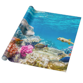 beautiful underwater fish world, wather
