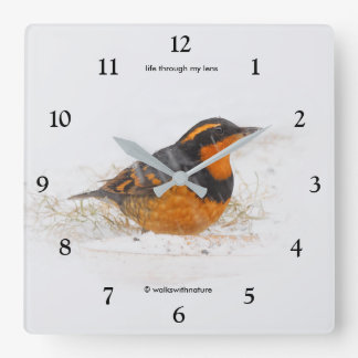 Beautiful Varied Thrush on a Snowy Winter's Day Square Wall Clock