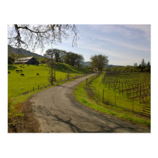 Beautiful Vineyard in Napa Valley California Postcard