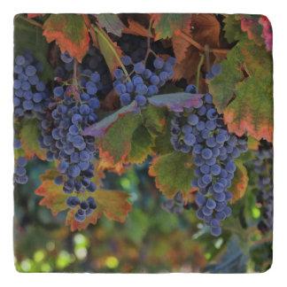 Beautiful Vineyard Wine Country Tuscan Trivet