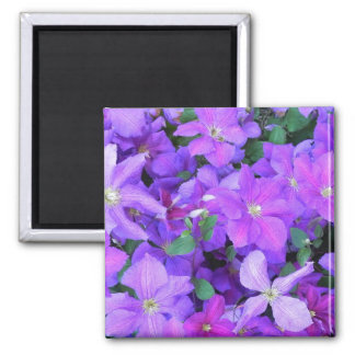 Beautiful Violet Clematis Magnet