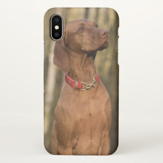 Beautiful Vizsla Sporting Dog iPhone X Case