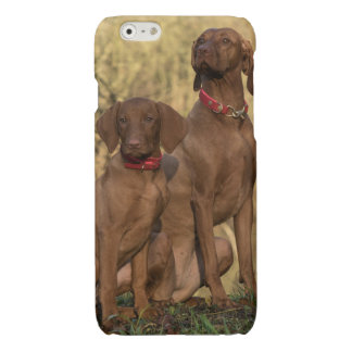 Beautiful Vizsla Sporting Dogs