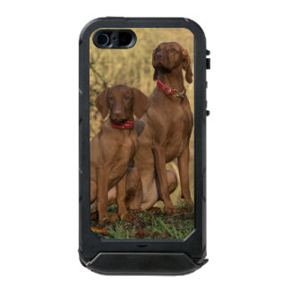 Beautiful Vizsla Sporting Dogs Incipio ATLAS ID™ iPhone 5 Case