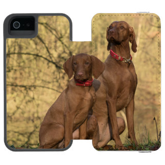 Beautiful Vizsla Sporting Dogs Incipio Watson™ iPhone 5 Wallet Case