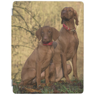 Beautiful Vizsla Sporting Dogs iPad Cover