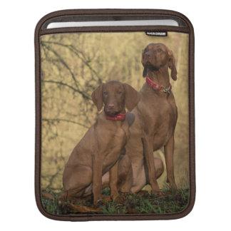 Beautiful Vizsla Sporting Dogs iPad Sleeve