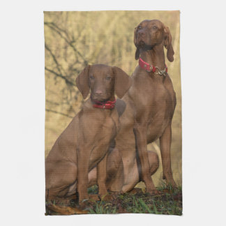 Beautiful Vizsla Sporting Dogs Kitchen Towel