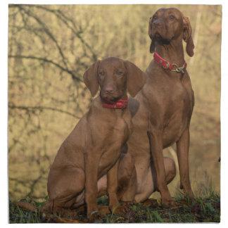 Beautiful Vizsla Sporting Dogs Napkin