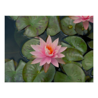 beautiful water flower poster