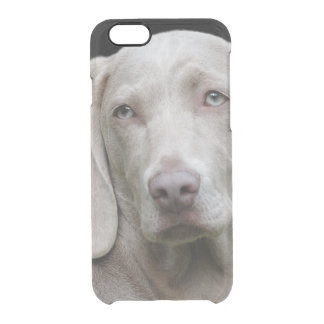 Beautiful Weimaraner Hunting Dog Clear iPhone 6/6S Case