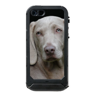 Beautiful Weimaraner Hunting Dog Incipio ATLAS ID™ iPhone 5 Case