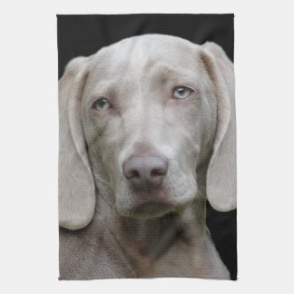 Beautiful Weimaraner Hunting Dog Kitchen Towel