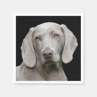 Beautiful Weimaraner Hunting Dog Paper Napkin