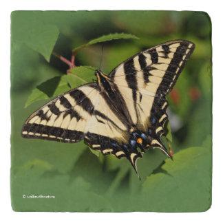 Beautiful Western Tiger Swallowtail Butterfly Trivet