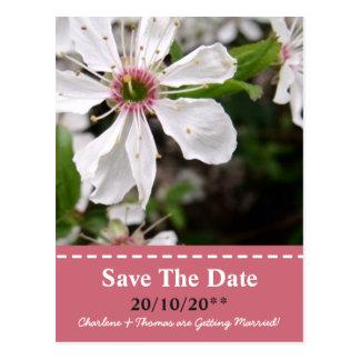 Beautiful White Blossom Wedding Postcard