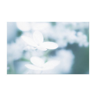 Beautiful white blossoms canvas print