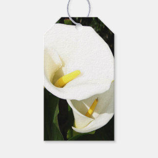 Beautiful White Calla Flowers In Bright Sunlight Pack Of Gift Tags