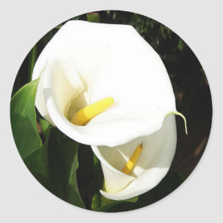 Beautiful White Calla Flowers In Bright Sunlight Round Sticker