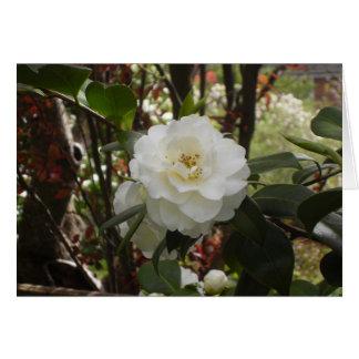 Beautiful White Camellia Card