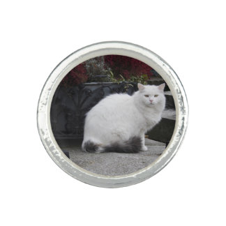 Beautiful White Cat On A Grave Rings