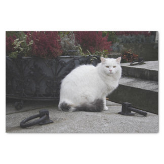 Beautiful White Cat On A Grave Tissue Paper