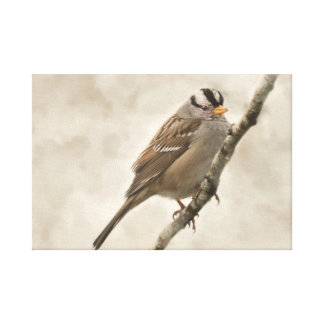 Beautiful White Crowned Sparrow Canvas Print