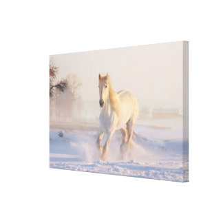 Beautiful White Horse Galloping in the Snow Canvas Print