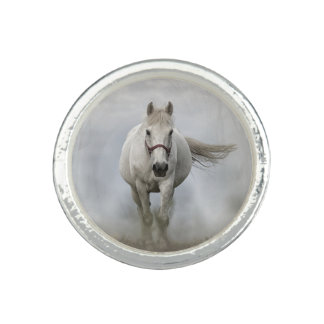 Beautiful white horse in mist photo rings