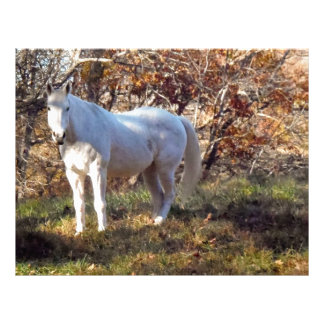 Beautiful White Horse Customized Letterhead