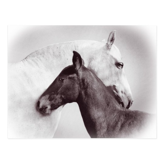 Beautiful white mare horse with black foal postcard