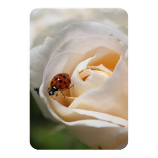 Beautiful white rose flower and ladybug,  floral n custom announcements