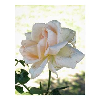Beautiful white rose flower letterhead