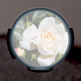 Beautiful white rose flowers. floral photo art LED window decal