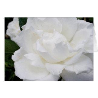 Beautiful White Rose Greeting Card