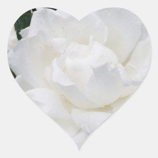 Beautiful White Rose Heart Sticker