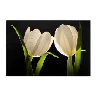 Beautiful White Tulips on black Background Acrylic Print
