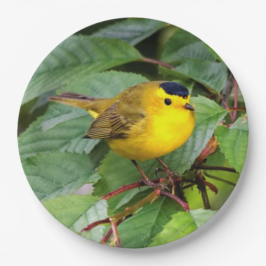Beautiful Wilson's Warbler in the Cherry Tree 9 Inch Paper Plate