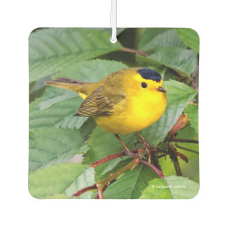 Beautiful Wilson's Warbler in the Cherry Tree Car Air Freshener