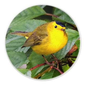 Beautiful Wilson's Warbler in the Cherry Tree Ceramic Knob