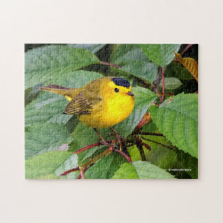 Beautiful Wilson's Warbler in the Cherry Tree Puzzle