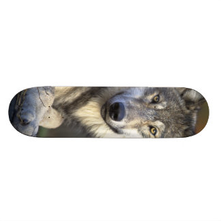 Beautiful Wolf Skateboard Decks
