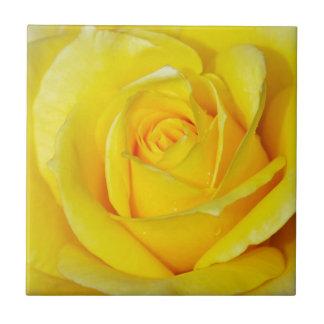 Beautiful yellow rose petals tile