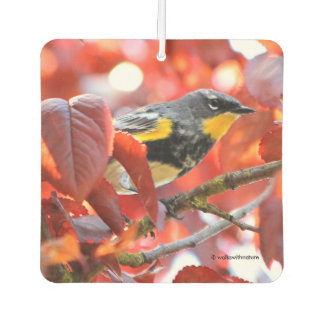 Beautiful Yellow-Rumped Warbler in the Tree Car Air Freshener