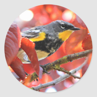 Beautiful Yellow-Rumped Warbler in the Tree Classic Round Sticker